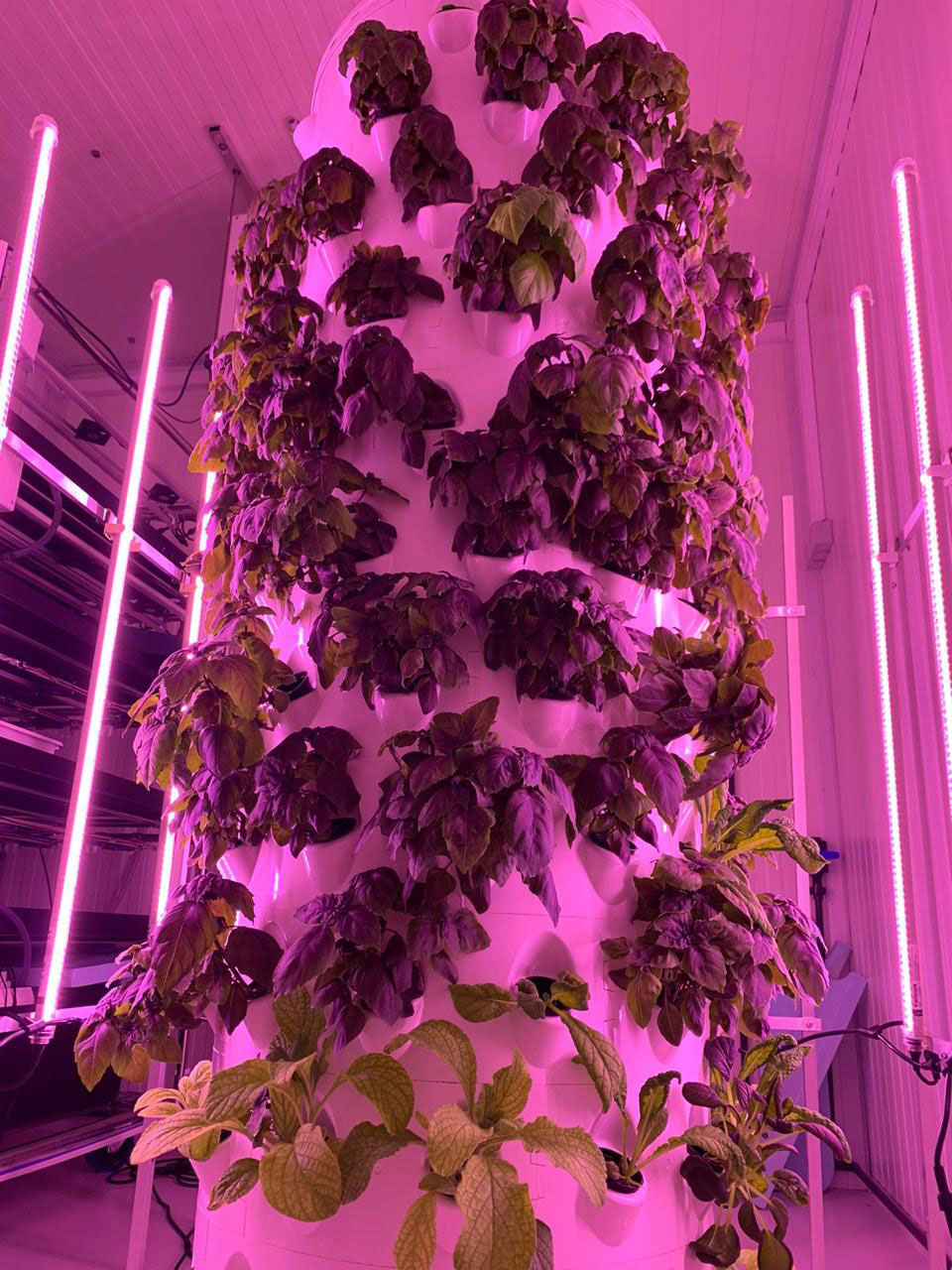 agriculture vertical growing
